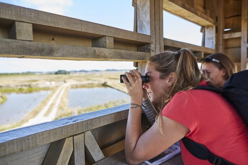 Observation des oiseaux en Presqu'île de Guérande -  © Alexandre Lamoureux